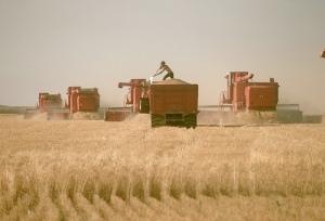 Industrielle Landwirtschaft ...