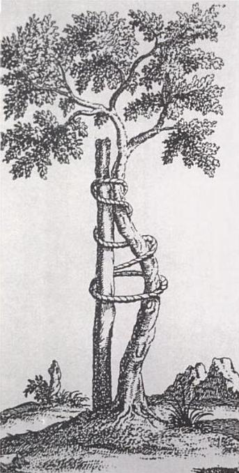 Andry_tree